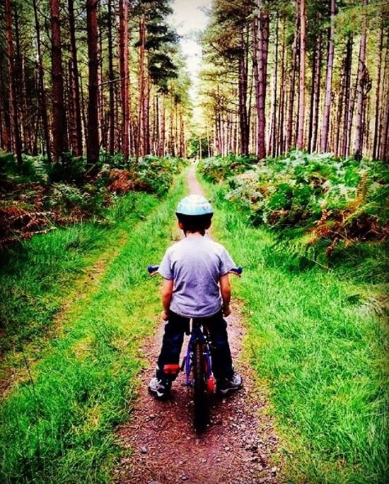 Thetford Forest, 2014